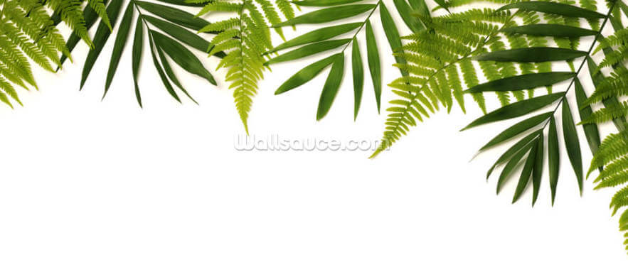 Frame of Green Leaves Wallpaper Wall Murals