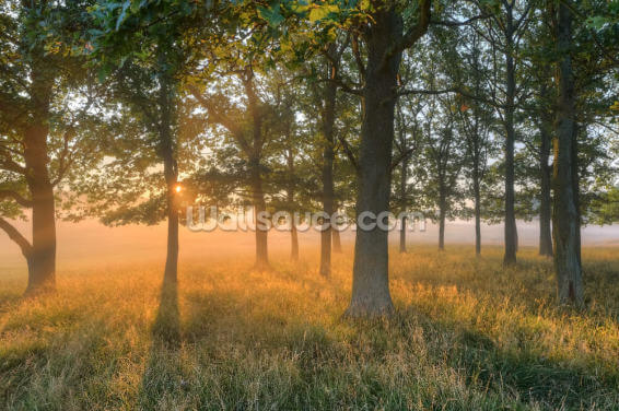 Morning Sun Wallpaper Wall Murals