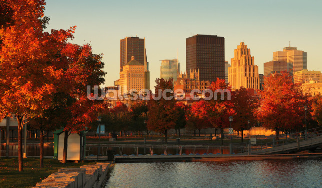 Autumn in Montreal Wallpaper Wall Murals