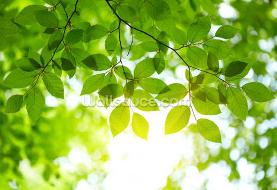 Sunlight Leaves Wallpaper Wall Murals