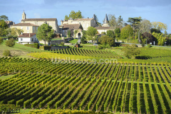 Saint Emilion, Bordeaux Vineyards Wallpaper Wall Murals