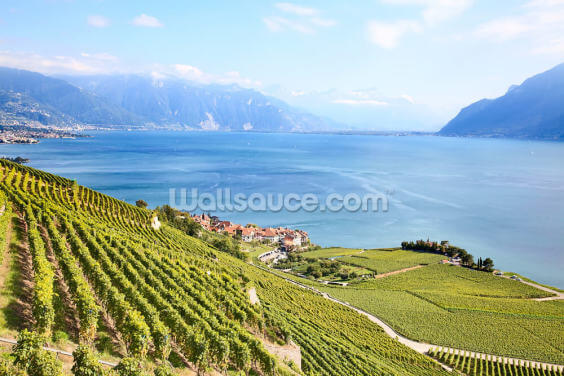 Lavaux Region Vineyards Wallpaper Wall Murals