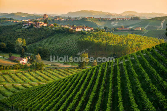 Panorama Collinare con Vigneti Wallpaper Wall Murals