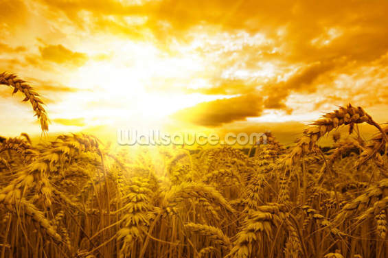 Sunset Over Wheat Field Wallpaper Wall Murals