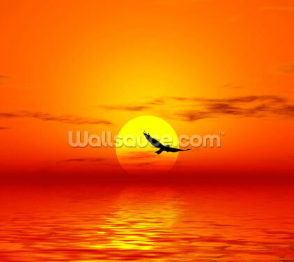 Red Sunset & Bird Wallpaper Wall Murals