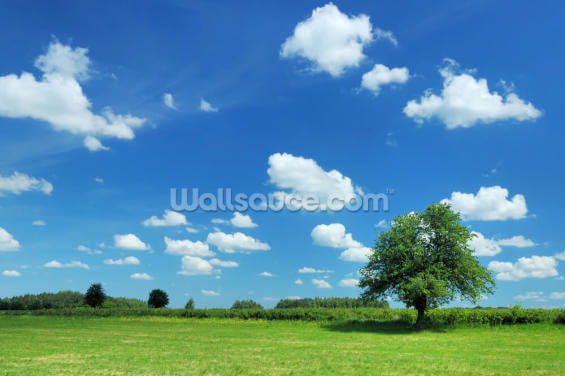 Summer Landscape Wallpaper Wall Murals