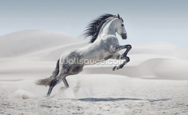 Snow Horse Wallpaper Wall Murals