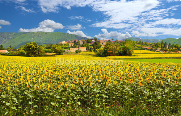 Provence Sunflowers Wallpaper Wall Murals