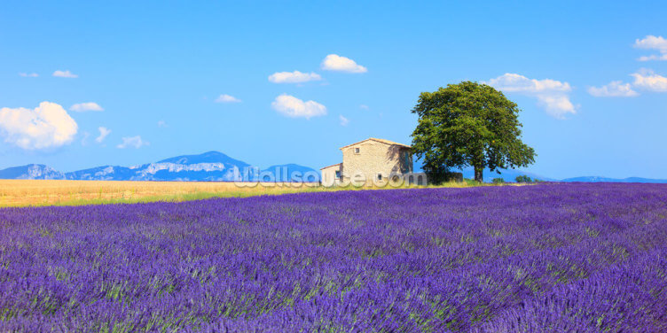 Provence - Lavender Flowers Wallpaper Wall Murals