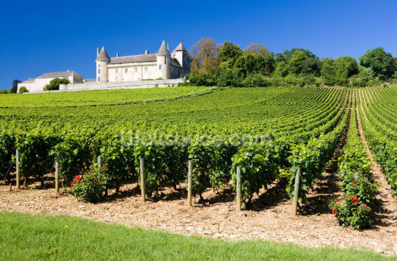 Burgundy, Chateau de Rully Vineyards Wallpaper Wall Murals