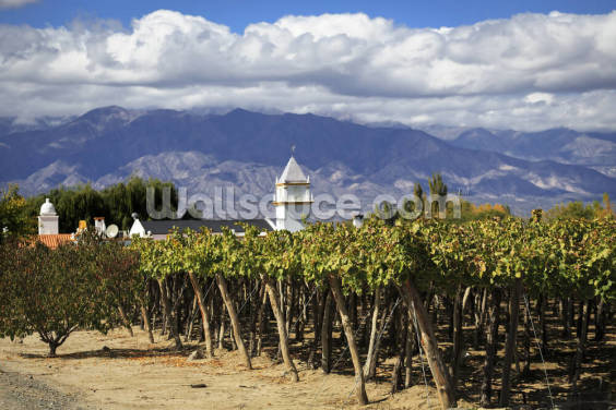 Vineyards in Cafayate Wallpaper Wall Murals