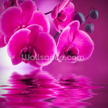 Pink Orchids Wallpaper Wall Murals
