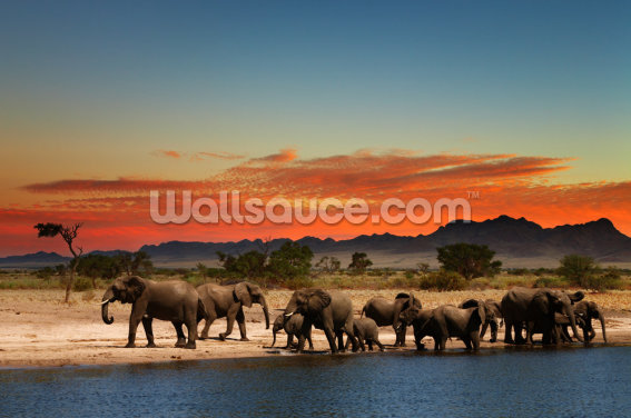 African Elephants Wallpaper Wall Murals