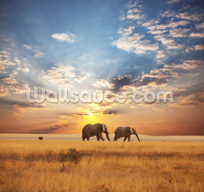 Elephants at Dusk Wallpaper Wall Murals