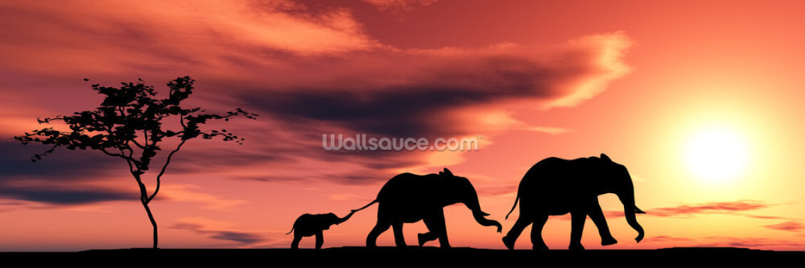 Elephant Family Wallpaper Wall Murals