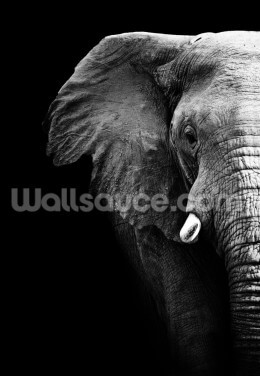 Elephant Close Up Wallpaper Wall Murals