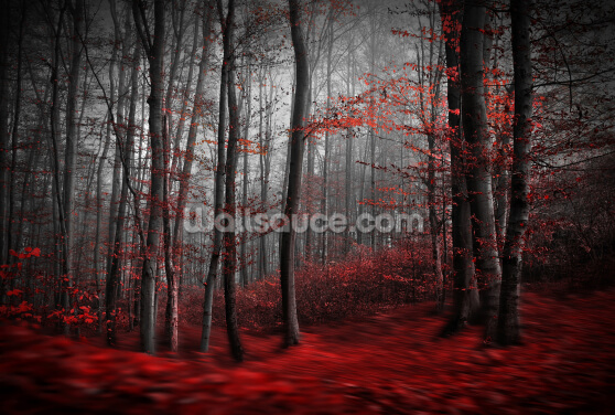 Red Carpet Forest Wallpaper Wall Murals