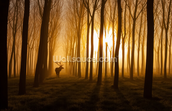 Forest Stag Wallpaper Wall Murals