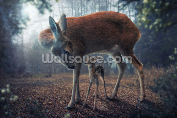 Mother and Fawn Wallpaper Wall Murals