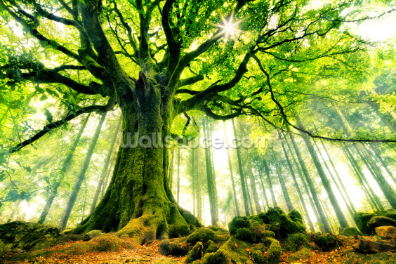 Mother Tree Wallpaper Wall Murals