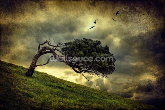 Winds of Change Wallpaper Wall Murals