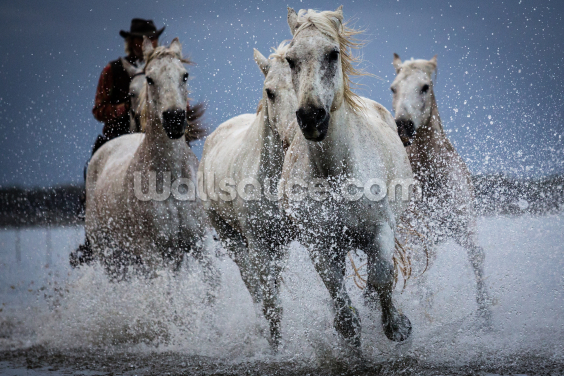 Cowboy Horses Wallpaper Wall Murals