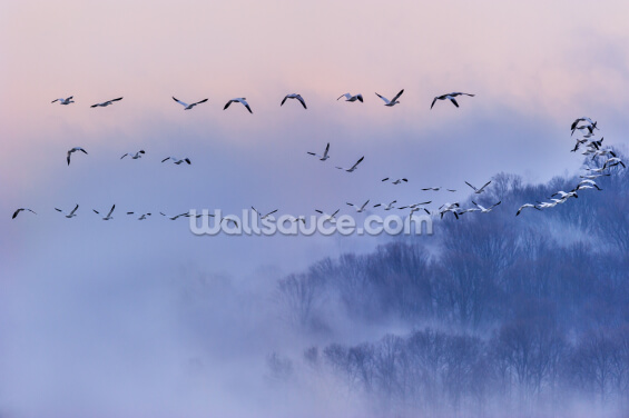 Snow Geese Wallpaper Wall Murals