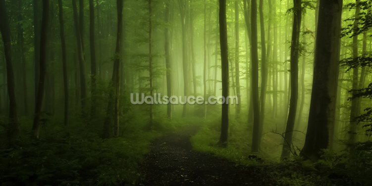 Misty Green Forest Wallpaper Wall Murals
