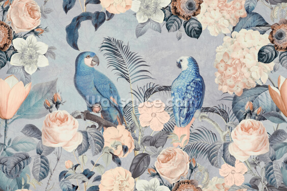Parrots in Love Wallpaper Wall Murals