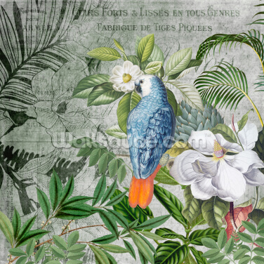 Jungle of Birds Wallpaper Wall Murals