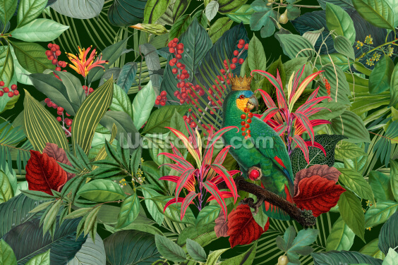 Parrot King Wallpaper Wall Murals