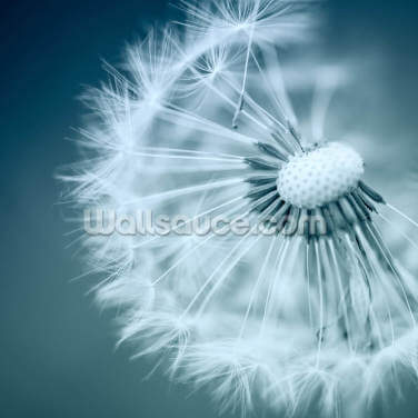 Dandelion Wallpaper Wall Murals