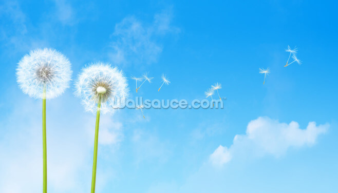 Dandelion Blue Sky Wallpaper Wall Murals