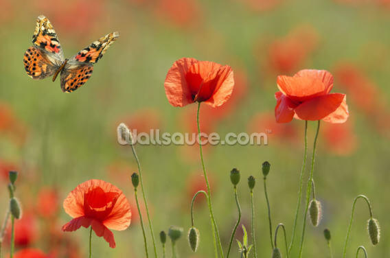 Poppies and Butterflies Wallpaper Wall Murals