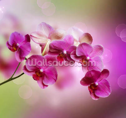 Orchid Wallpaper Wall Murals