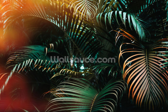 Deep Dark Palm Leaves Wallpaper Wall Murals