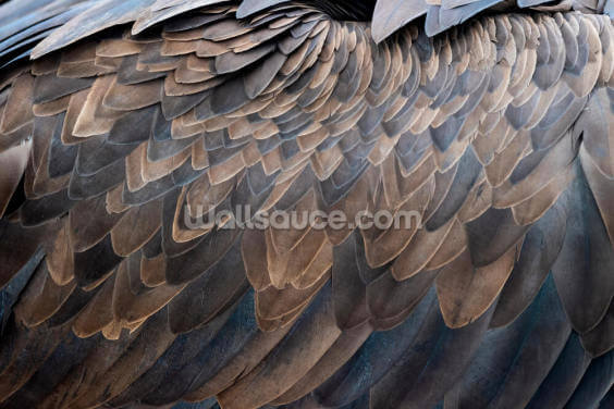 Vulture Feathers Print Wallpaper Wall Murals