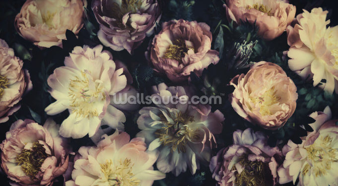 Purple Roses Wallpaper Wall Murals