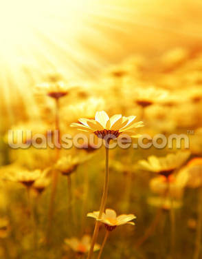 Field of Daisies Wallpaper Wall Murals