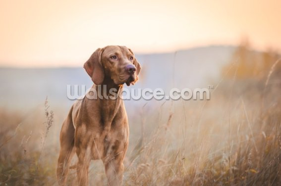 Vizsla in Meadow Wallpaper Wall Murals