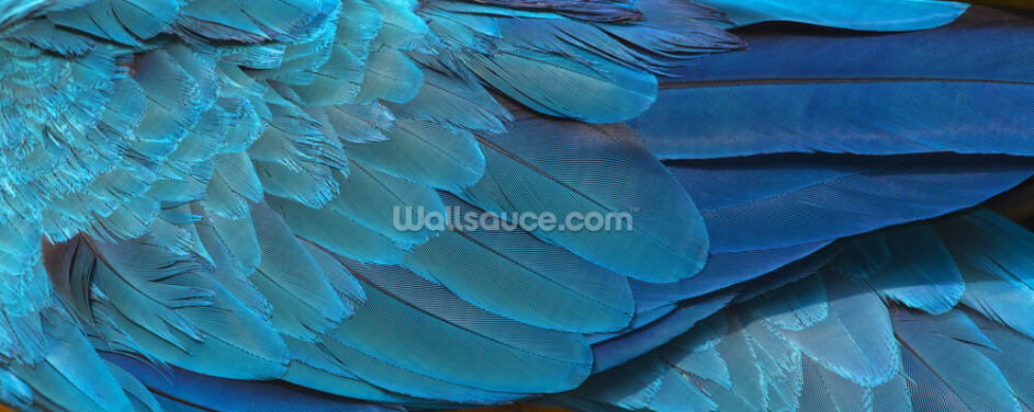 Blue Macaw Feather Print Wallpaper Wall Murals