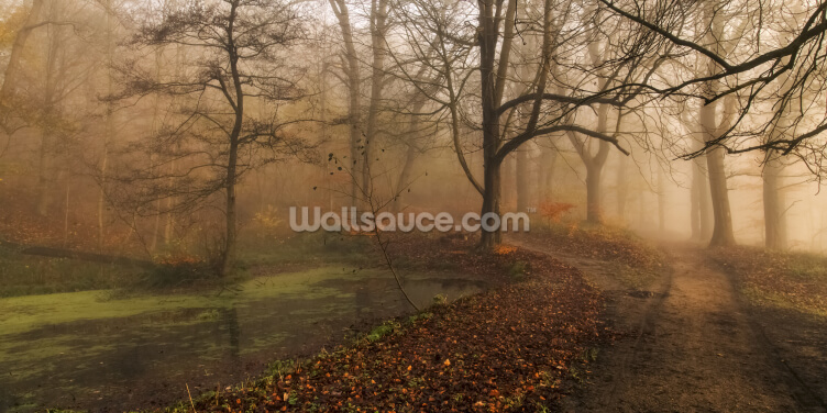 Which Path Wallpaper Wall Murals