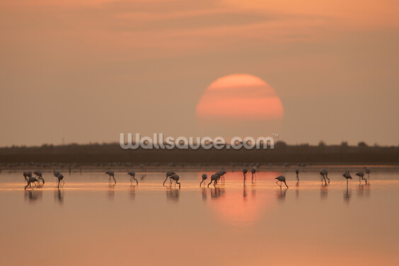 Flamingos at Sunrise Wallpaper Wall Murals