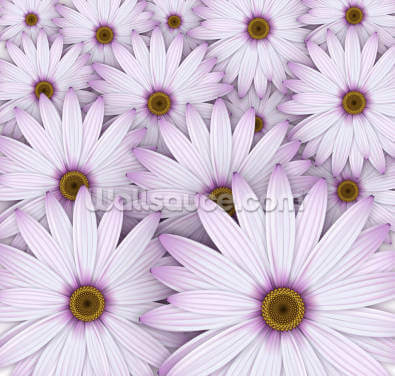 Field of Purple Daisies Wallpaper Wall Murals