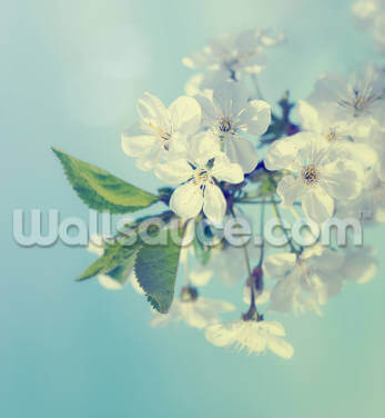 Cherry Blossoms Wallpaper Wall Murals
