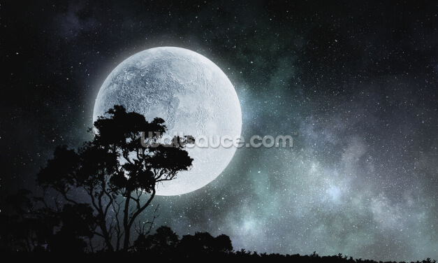 Black and White Moon Wallpaper Wall Murals
