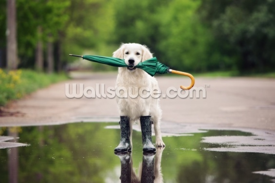 Walkies in the Rain Wallpaper Wall Murals