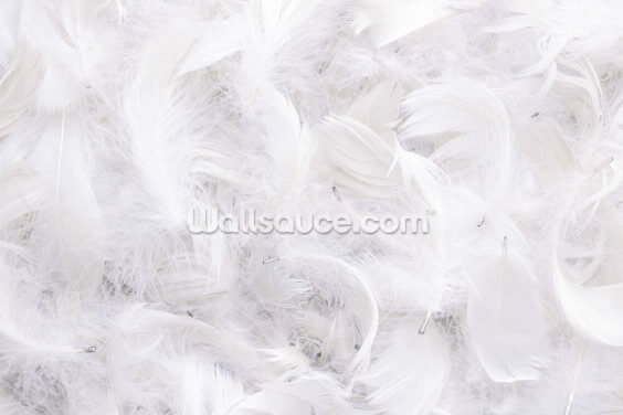 Ostrich Feather Wallpaper Wall Murals