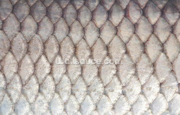 Grey Fish Scale Wallpaper Wall Murals
