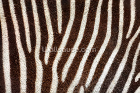 Brown Zebra Print Wallpaper Wall Murals